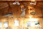 george-river-lodge-trophy-wall.jpg